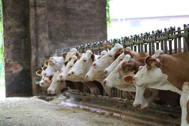 Overgrote deel melkveehouders leest vakblad Melkveebedrijf, Hans van der klis, MediaFacts